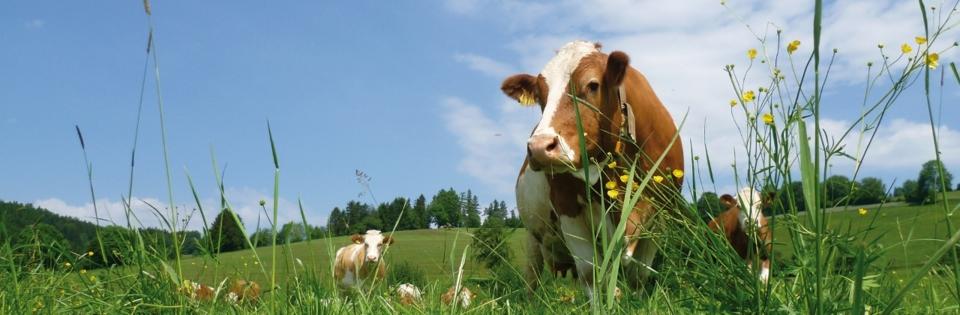 Landhotel spreitzhofer,Sommerfrische,sommerfrische steiermark,sommerfrische österreich